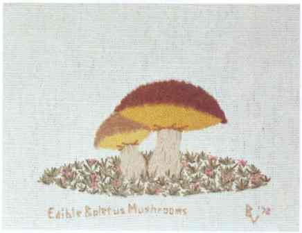 #355 Edible Boletus Mushrooms