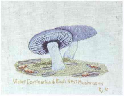 #357 Violet Cortinarious & Bird's Nest Mushrooms