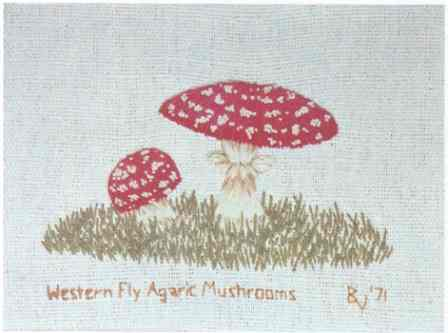 #358 Western Fly Agaric Mushrooms