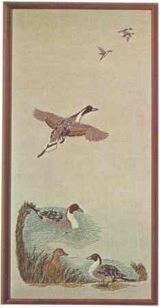 #371 Pintail Ducks