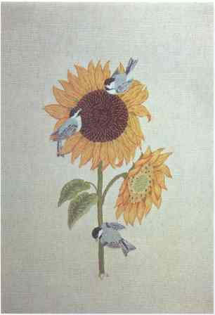 #377 Black-capped Chickadees & Sunflowers