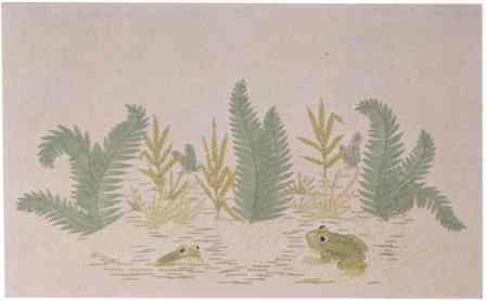 #388 Frogs And Ferns